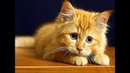 Лучшие приколы про котиков Подборка самых смешных кошек и котят