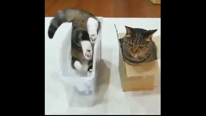 Кошачий дзен