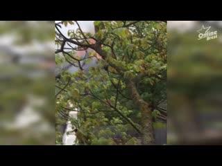 В Бресте произошел пожар в деревянном нежилом доме