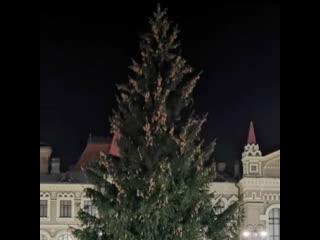 Администрация Рыбинска спилила дворовую ёлку для центральной площади