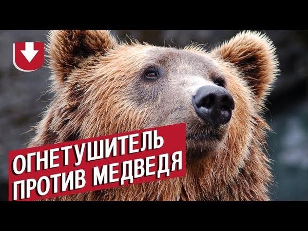 На Камчатке медведь ворвался в столовую к вахтовикам Посмотрите как его выгнали