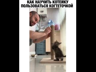 Как научить кота пользоваться когтеточкой