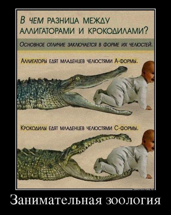 Анекдот Про Крокодила