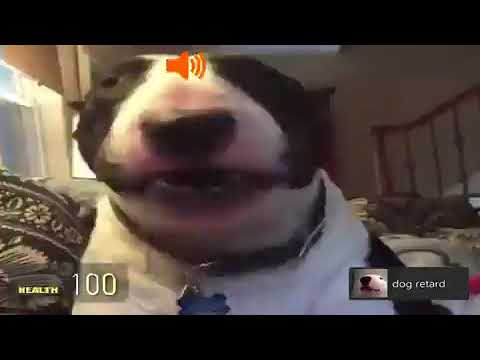 You gonna suck this cock dog meme
