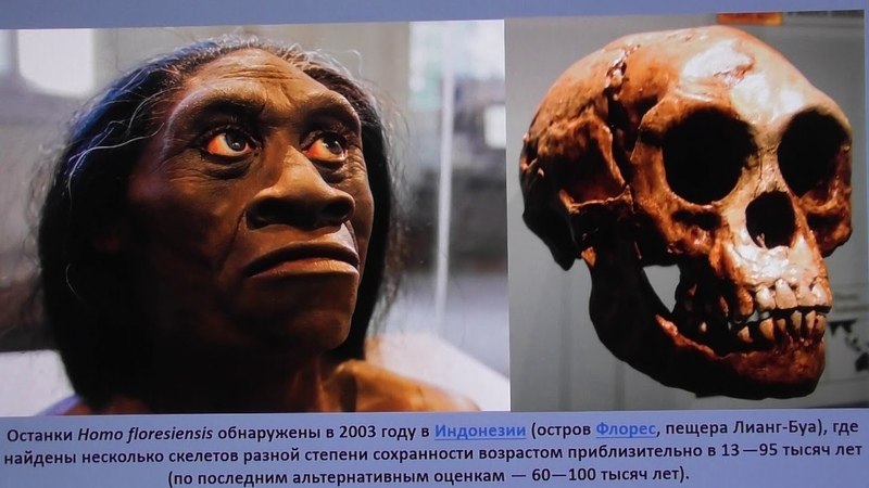 Инволюция секс и голод А Белов 13 июня 2020