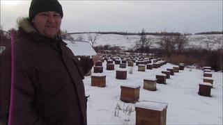 Наше пчело-хозяйство на сегодняшний день.
