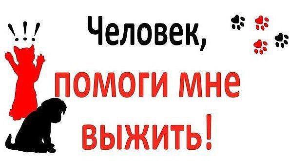 сибирское спасите котенка картинка воронежской области, где