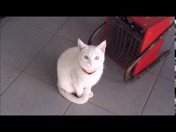 Зима в Сочи Отогреваем кота