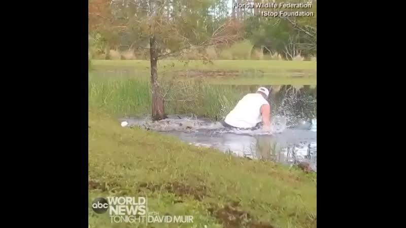 Мужчина спас щенка от аллигатора 480p mp4
