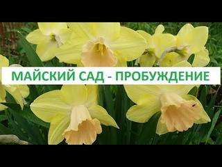 майский сад -   пробуждение