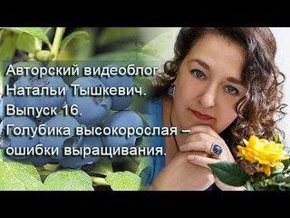Авторский видеоблог Натальи Тышкевич. Выпуск 16. Голубика высокорослая – ошибки выращивания.