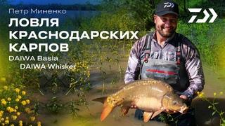 Ловля краснодарских карпов с Петром Миненко