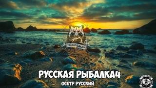 Русская Рыбалка 4 -  Стрим  Турнир на карася рр4 топ игра