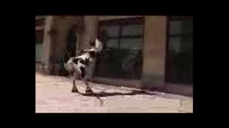 Бешеная корова 3gp