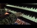 J S Bach Małe Preludia C dur organy
