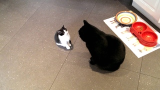 Little cat meets big cat