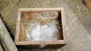 Первый осмотр гнезд и немного о куковании. Когда нужно проводить и для чего?