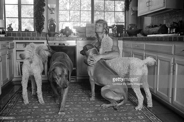 Патрик Суэйзи и его любимые собаки
