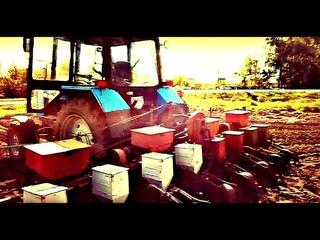 Трактор МТЗ 920 и сеялка СУПН 8. Сеем кукурузу. Как и чем перевозить сеялку. Sowing corn. #vseklevo