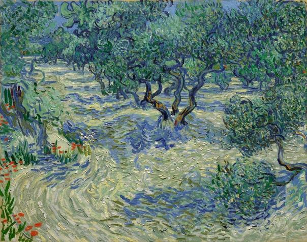 «Оливковый сад», Винсент Ван Гог