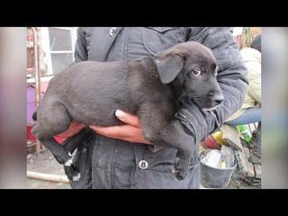 Горевшему вЧереповце приюту для бездомных животных «Спас» требуется помощь