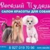 """Стрижка собак в салоне """"Веселый пудель"""" в Самаре"""