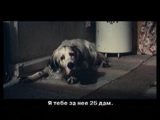 Bim chien blanc à l'oreille noire (2ème série) / Белый Бим черное ухо (Вторая серия) - (фр-яз. с ру-субт.) (