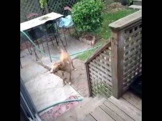 My Dog's an Idiot (Vine)