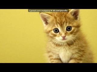 «котята» под музыку Элвин и бурундуки feat. Британи и бурундушки - начало фильма ( Элвин и бурундуки 3). Picrolla