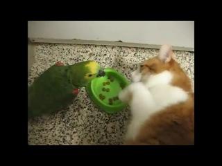 Кто на кухне настоящий босс попугай или кот