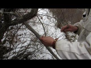 Инспектор снимает браконьерскую петлю - проволочный капкан, настороженный на звериной тропе на территории Сайлюгемского НП (весна, 2014 г.)