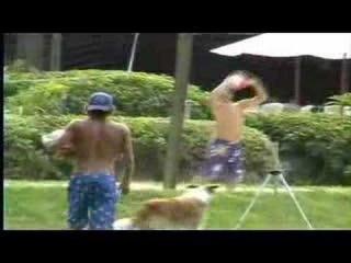 Dog Plays 2MAN Beach Volleyball ...