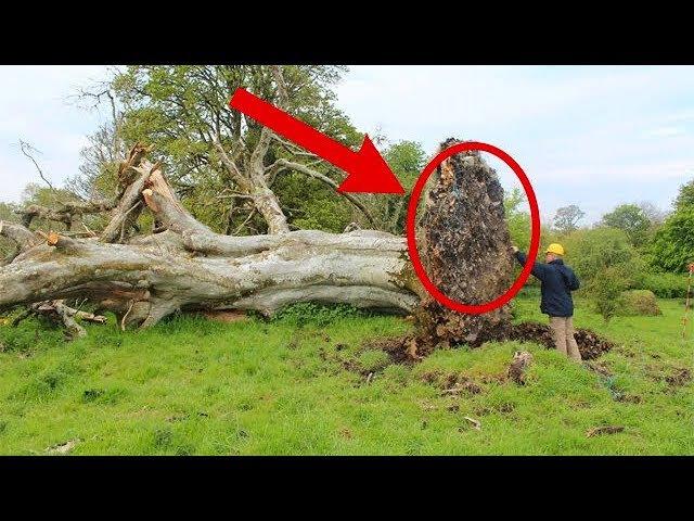 1000 лет это было скрыто от людей в корнях дерева Находку обнаружили благодаря сильному урагану…