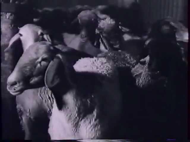 Адонис XIV Козел ведущий на убой Лидеры Байтайм или ТВ