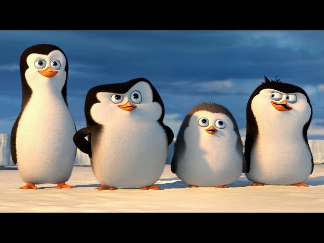 ПИНГВИНЫ МАДАГАСКАРА Пингвины Антарктики РОССИЯ