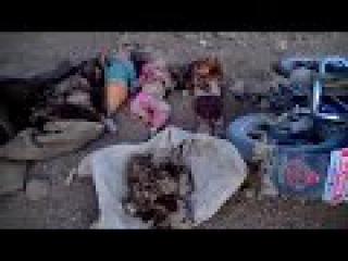 18+ Военные преступления Саудовской Аравии и США в г. Саада. Убитые дети. Йемен