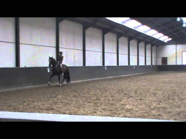 Because now we are free to be simply us Grand prix dressage movements with a simple cord.