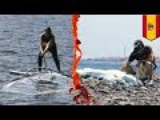 Виндсерфер убил россиянку, плававшую с маской