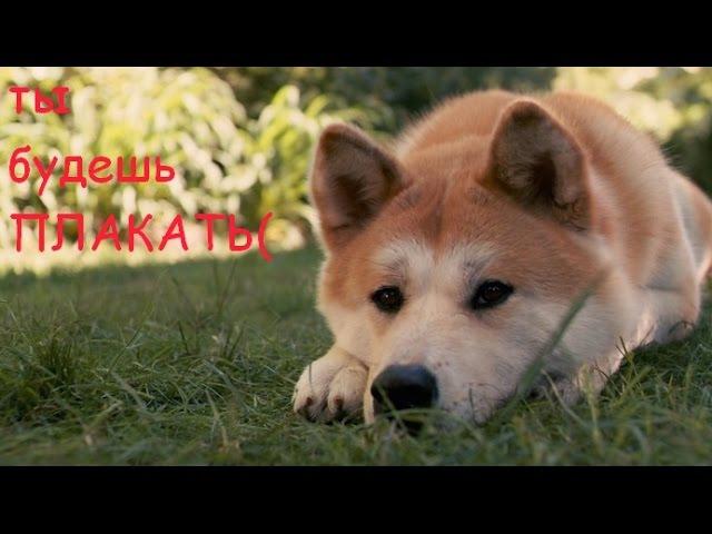 Хатико, клип который заставит вас плакать