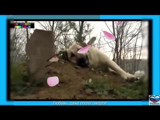 Five собак плачет над мертвым хозяином и другом5 dogs crying dead owner and friend