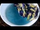Синий чай из Таиланда - как заваривать, где купить