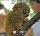 Фотоальбом человека Артёма Мишенькина