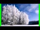 Белая берёза под моим окном , Поёт Олег Козлов, Смоленская обл.