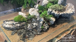 Penjing : l'Ile, un mélange de paludarium, d'aquascaping et de paysagisme végétal