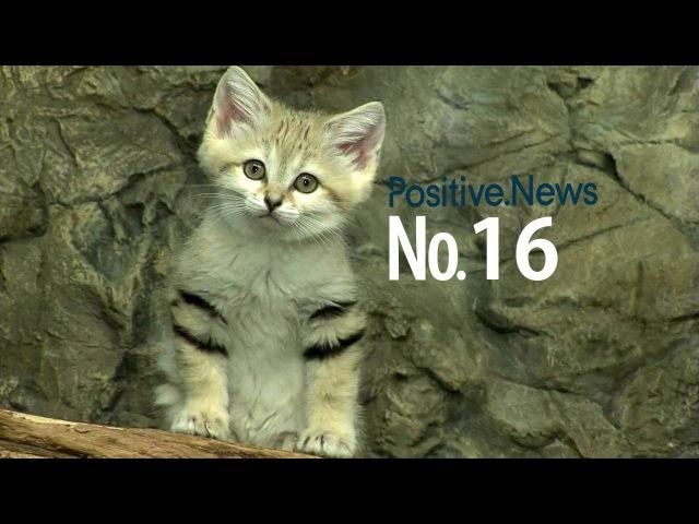 Барханный кот Самая красивая порода в мире