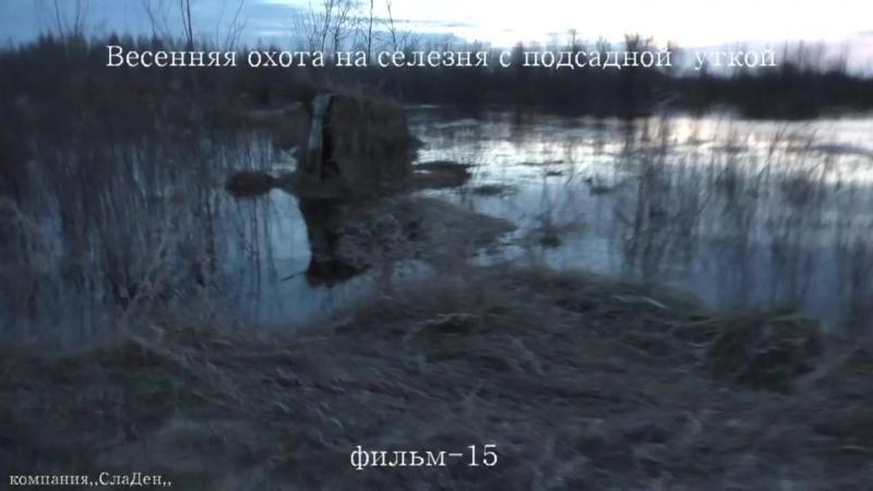 Весенняя охота на селезня с подсадной уткой.15.