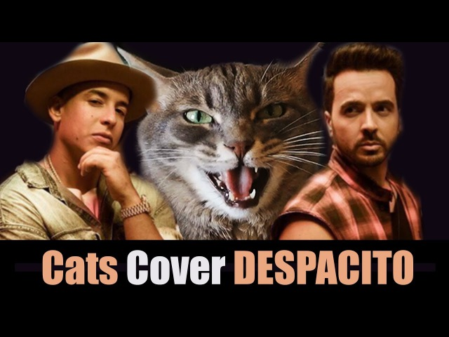 Despacito Cats version Versión Gatos