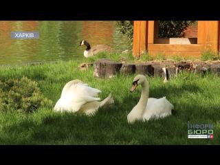 Деякі птахи Харківського зоопарку відправились у відрядження