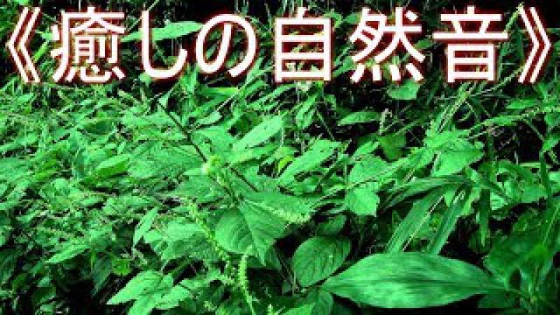 《癒しの自然音》 虫 の鳴き声 夏の夜の静かな森 リフレッシュ・ス 654
