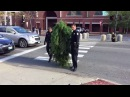 Police Arrest Man dressed as tree for blocking traffic in Maine Funny Twitter Video